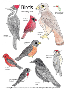 Birds of Hunting Red color page from PocketMousePublishing.com -- free download!