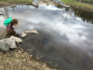 Checking out tadpoles on the first morning in May