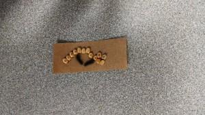 Cecropia moth caterpillars, hatching