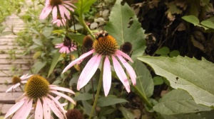 The flowers of a native landscaping plan support bumblees, butterflies and hummingbirds.