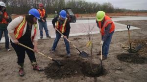 Alliant Energy employees volunteer to plant trees. The Lindens will be the dominant shade-producing trees for the driveway.